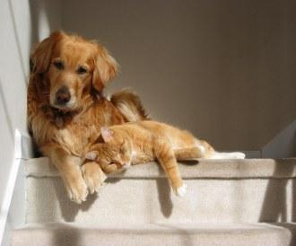 tenia la caini si pisici ipocriți și paraziți mișcă