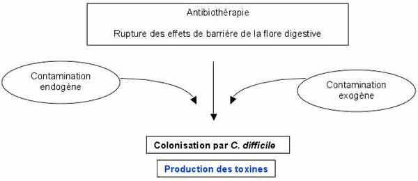 medicamente pentru paraziti intestinali la pisici papiloamele trebuie tratate