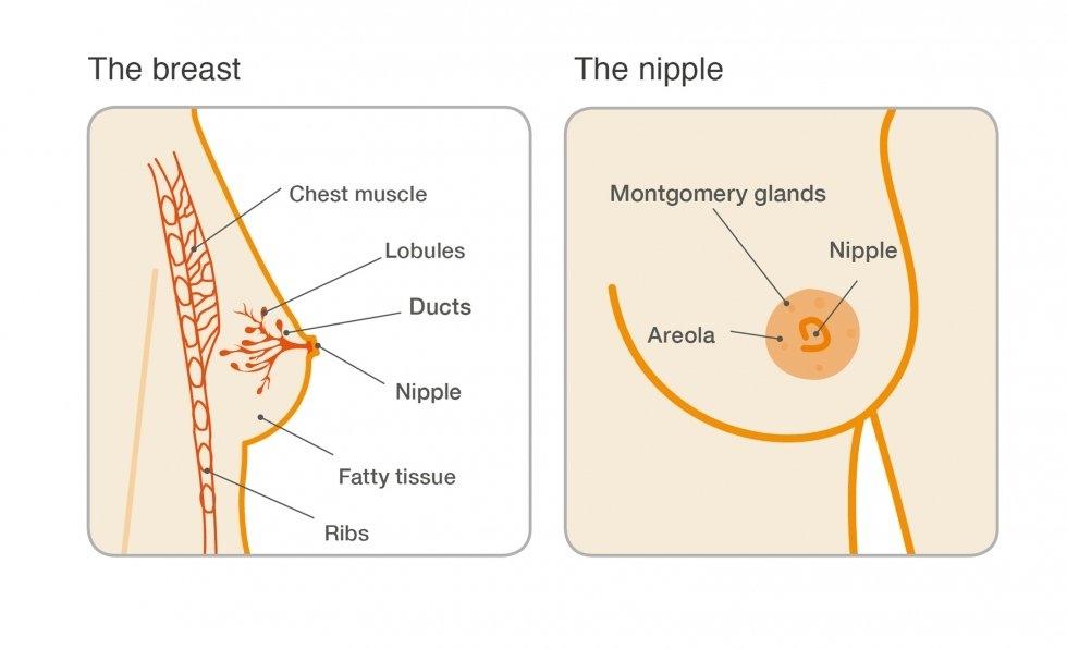 Testare HPV şi riscul de cancer de col uterin - Ana Medical Center