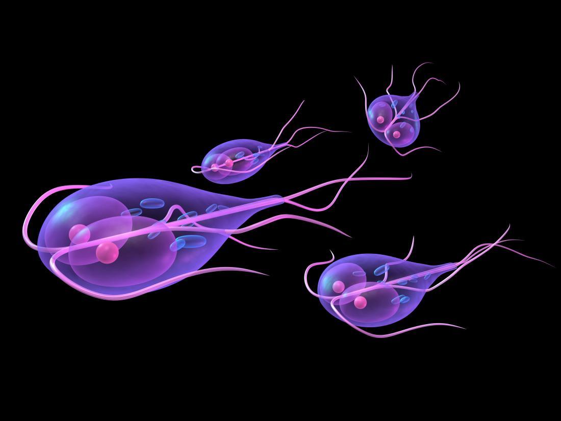 Paraziti organismului