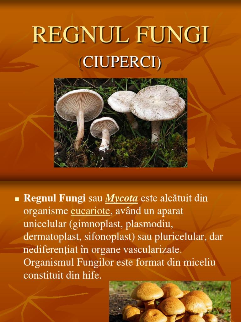 ciuperci clasa 5 cel mai sigur leac pentru viermi