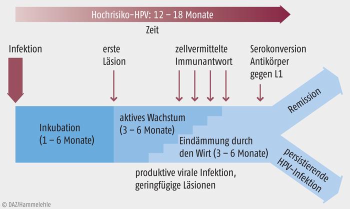 Verruga hpv caracteristicas. topvacanta.ro virusul HPV (PAPILOMAVIRUS UMAN), Hpv impfung haufigkeit
