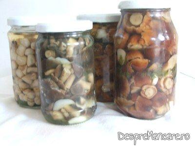 conservarea ciupercilor
