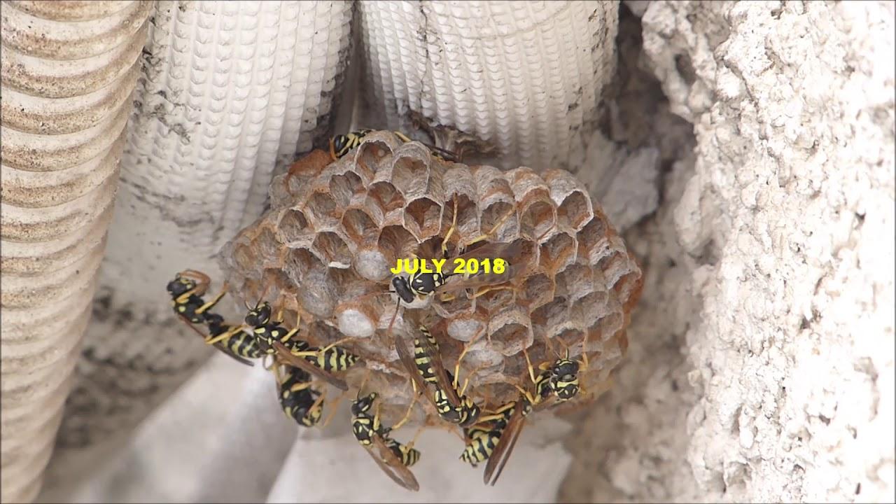 Alergia la înțepături de insecte
