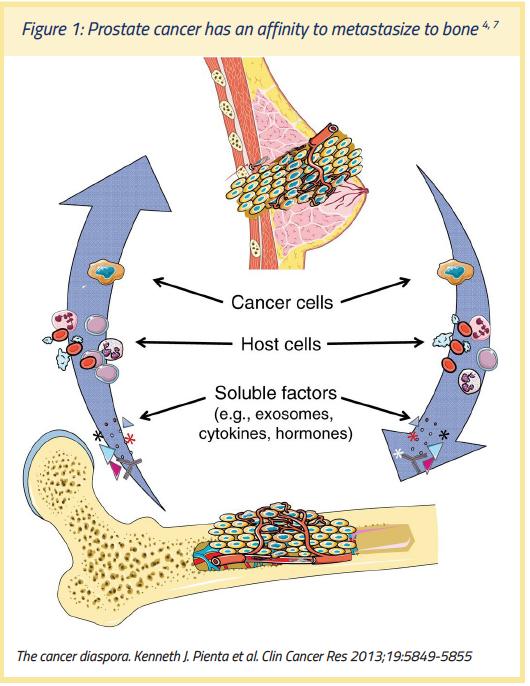 unde locuiește nematodul adult îndepărtarea verucilor genitale prin metoda undelor radio
