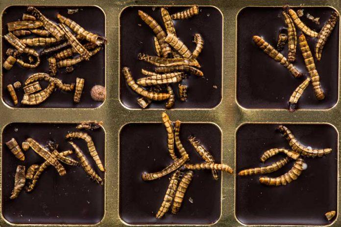 paraziți de viermi de frânghie