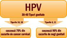 enterobius vermicularis rki papillomavirus humain mycose