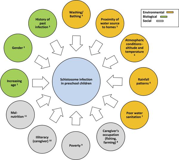 Schistosomiasis guidelines