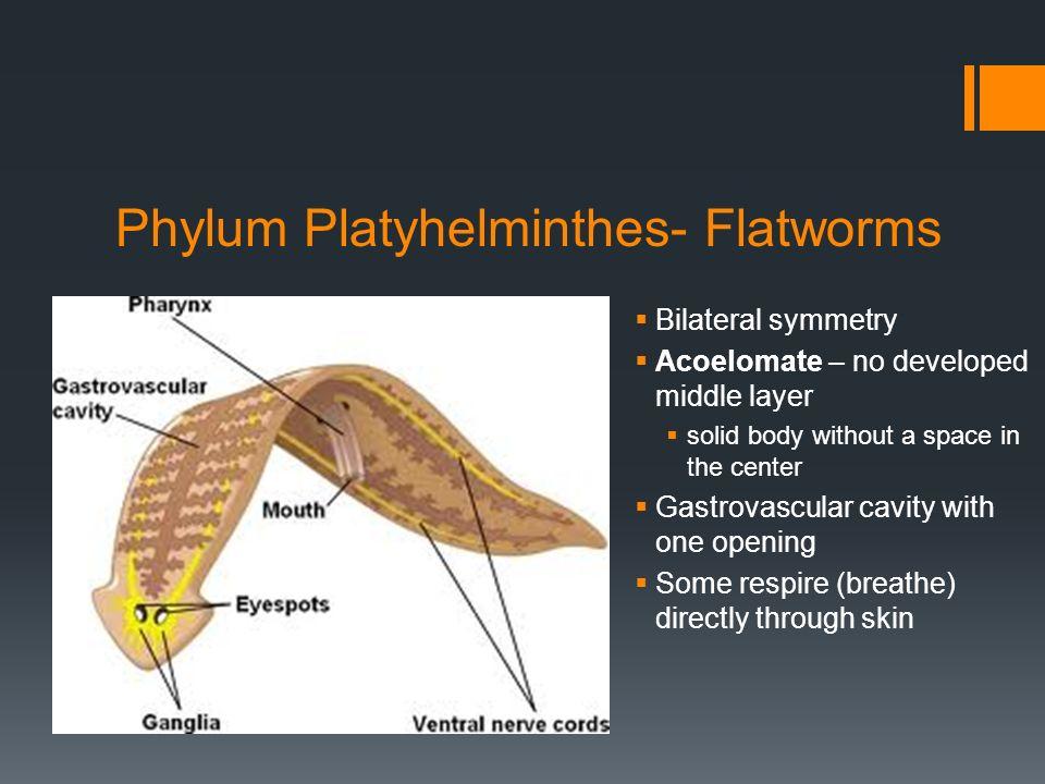 platyhelminthes nematoda annelida