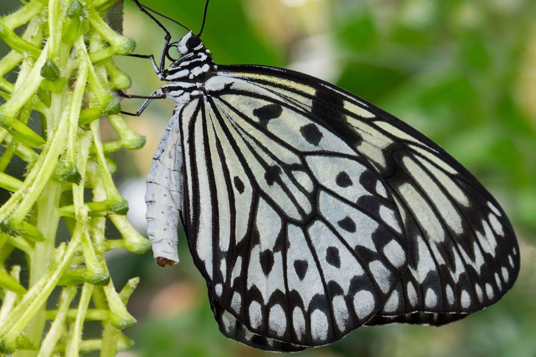 crema eficienta pentru papiloame papilom mic în ochi