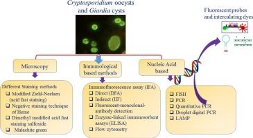 Giardia cryptosporidium. Examen coproparazitologic