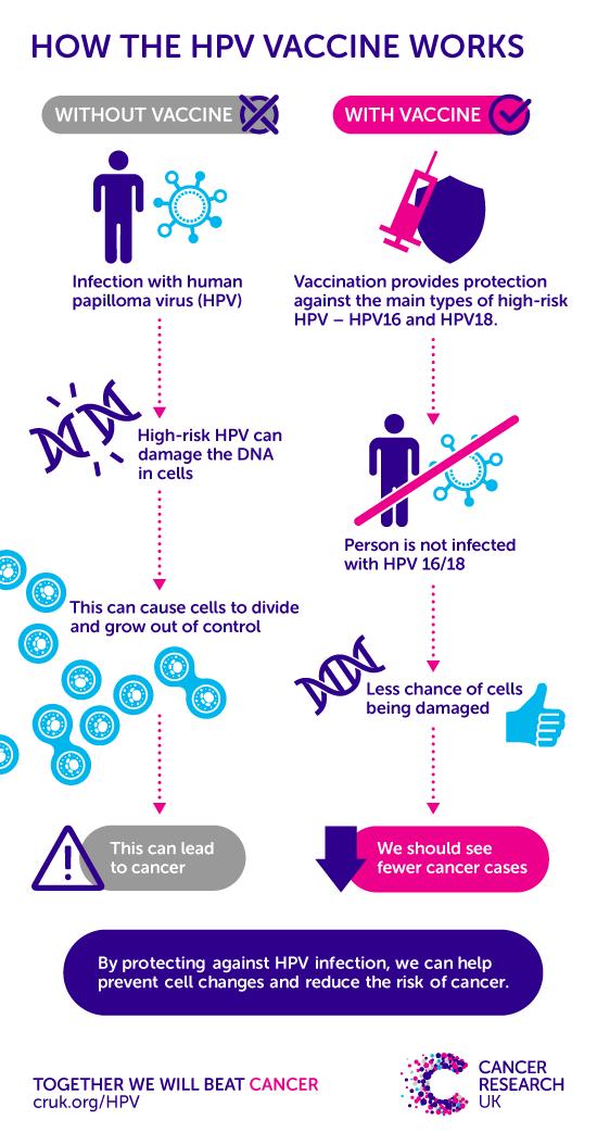 papillomavirus cancer risk the human papillomavirus hpv causes
