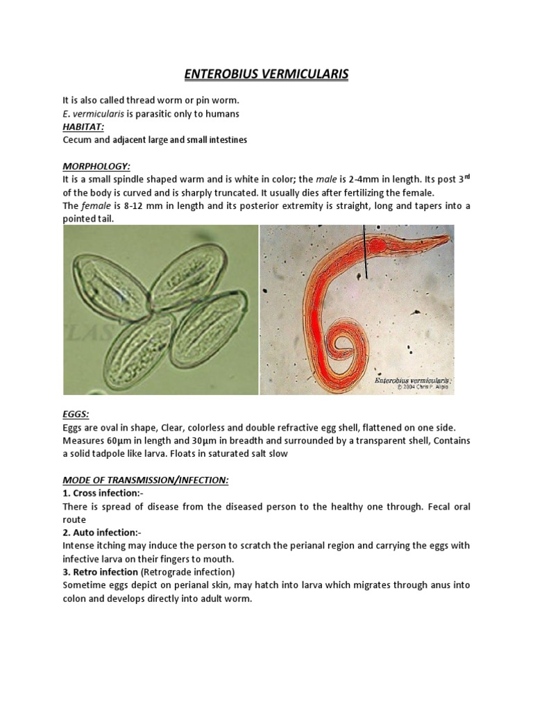 tablete din larve de vierme