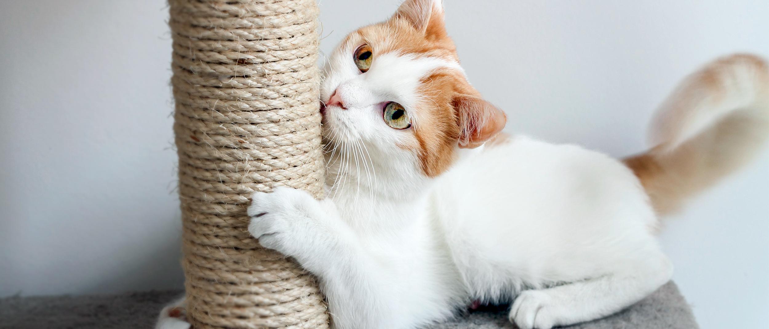 vitMATINA Ce boli poti lua de la animalele de companie si cum sa le previi | Medlife