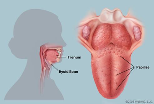 Hpv wart tongue. Oral cancer and HPV warts treatment drugs